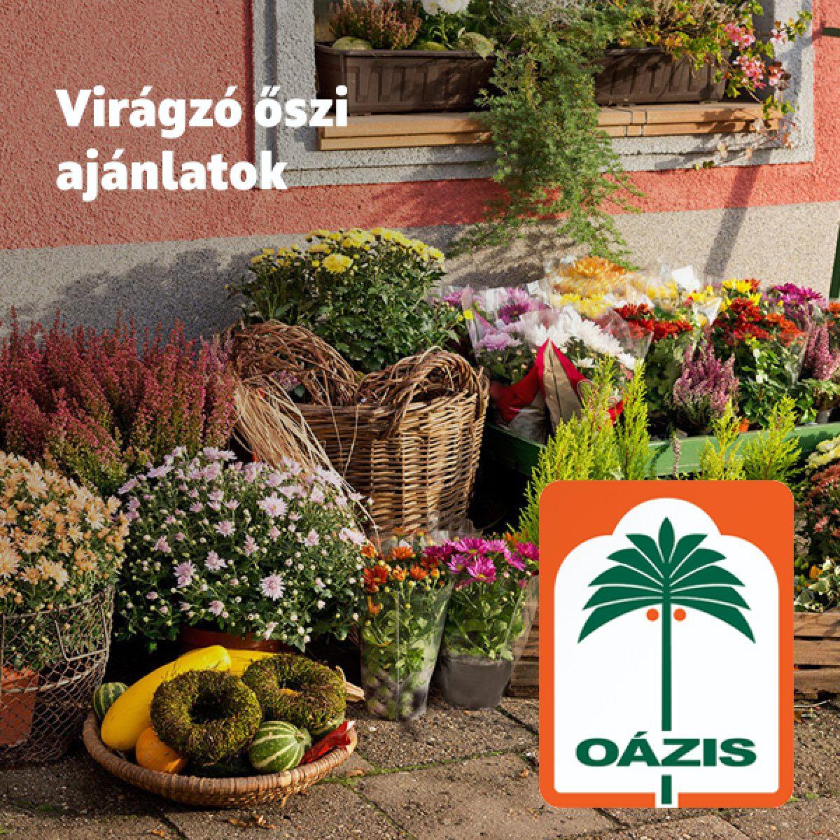 oazis_akcio_04