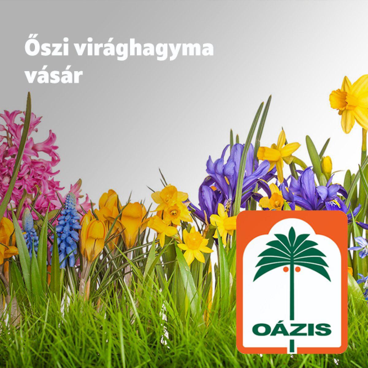 oazis_akcio_05